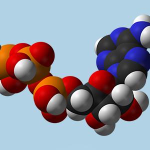 متابولیسم چیست | متابولیسم | پرنده