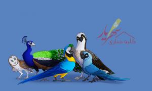 انواع پرندگان