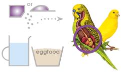 درمان تنفس پرندگان
