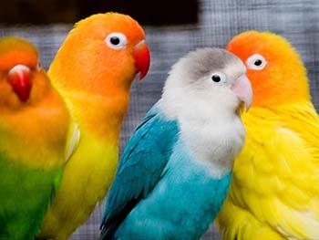 نکات مثبت نگهداری پرنده