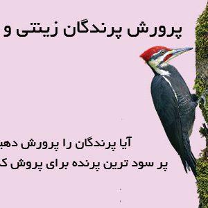 پرورش پرندگان زینتی و صنعتی