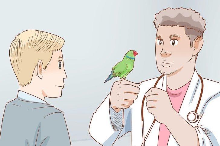 درمان اسهال پرندگان زینتی و طوطی سانان