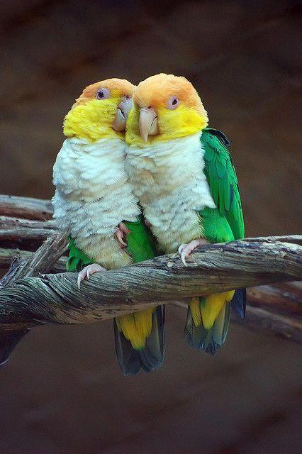 غذای پرندگان