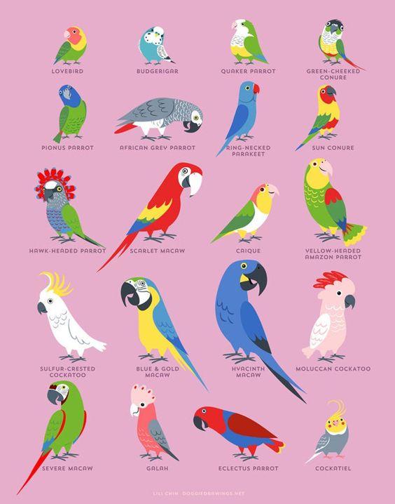 مشاوره پرندگان