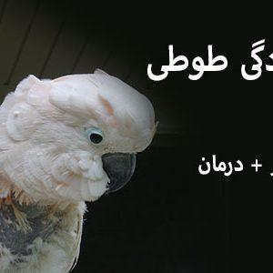 افسردگی طوطی و پرندگان
